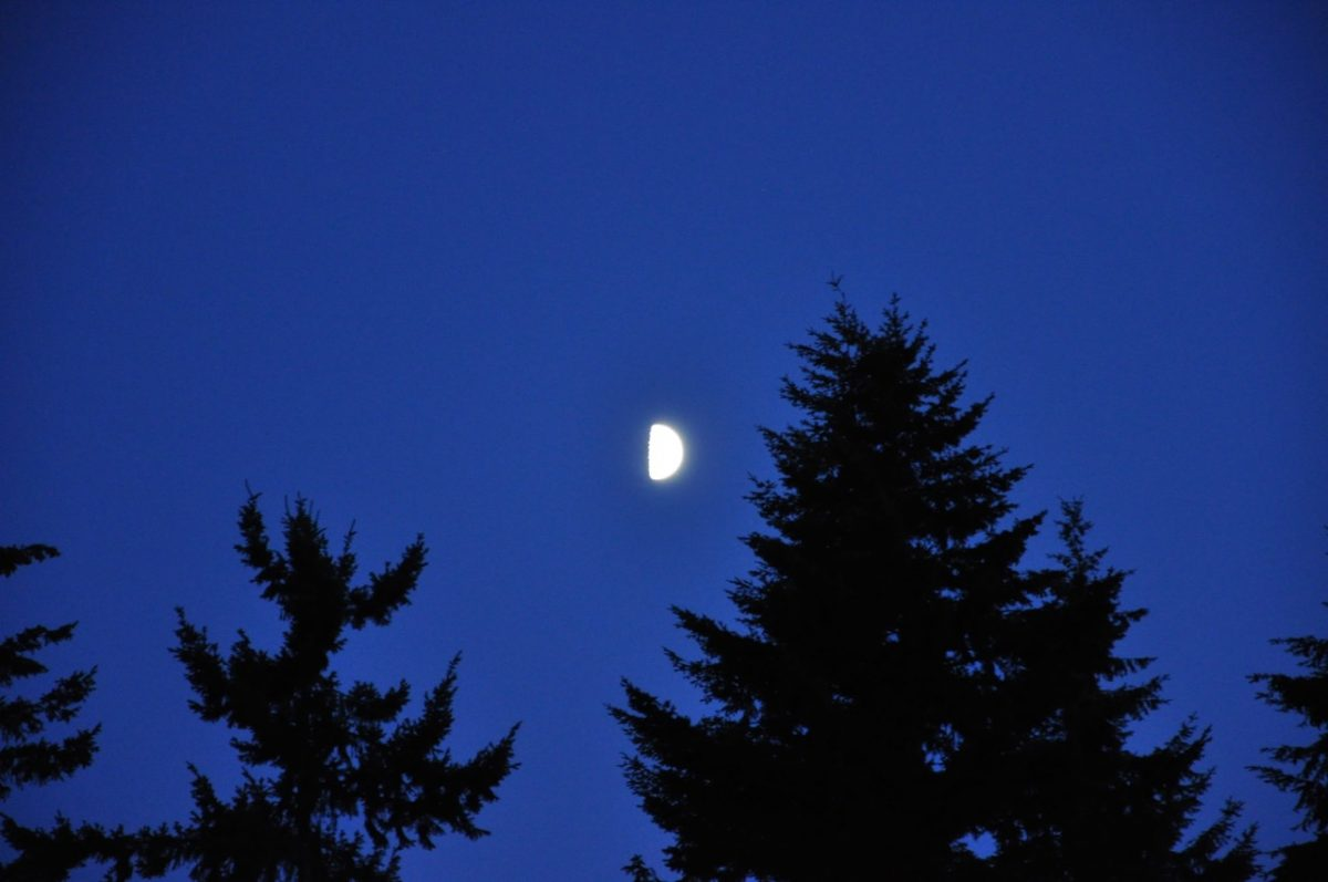Half moon rising in a deep blue sky over the silhouettes of evergreen trees.