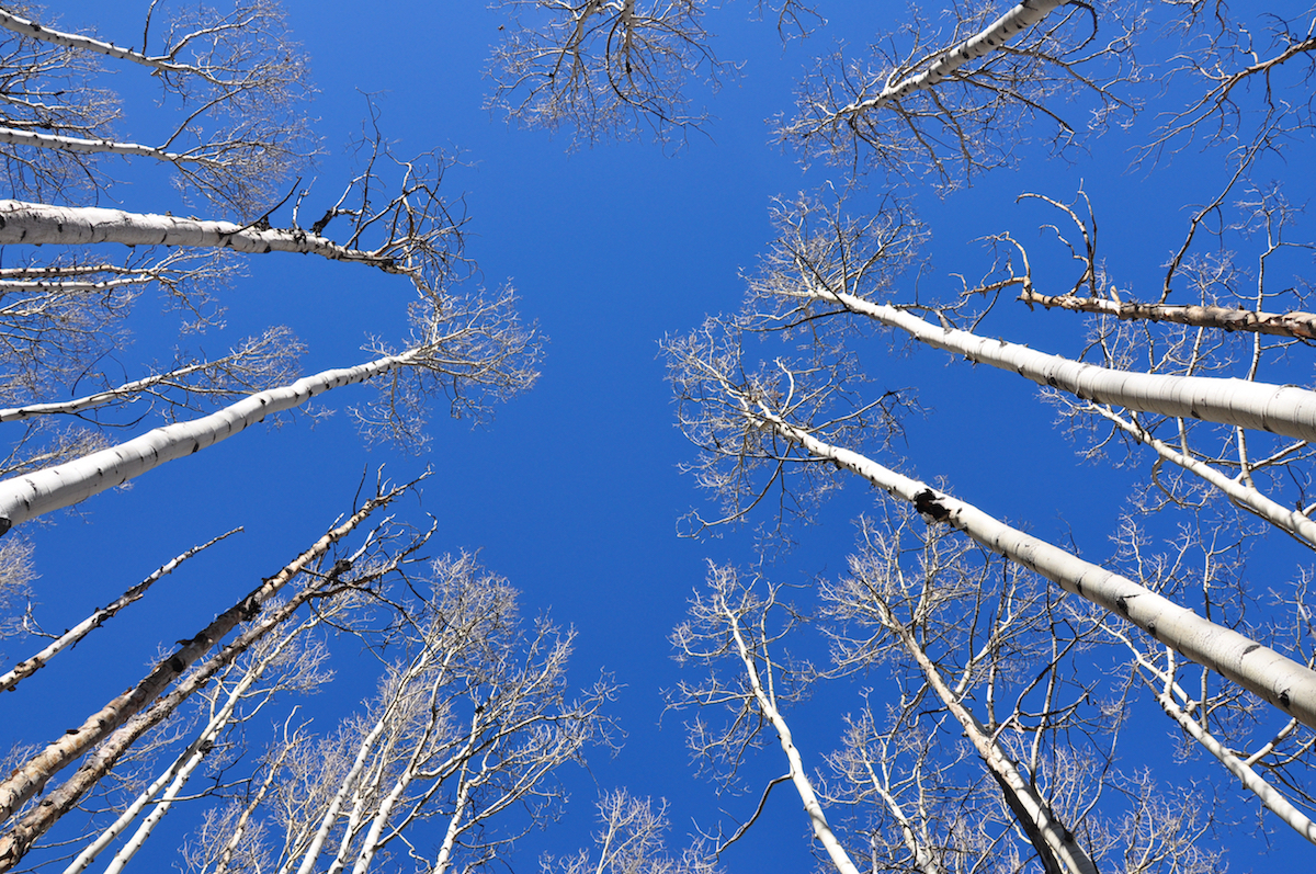 view of the sky through the trees