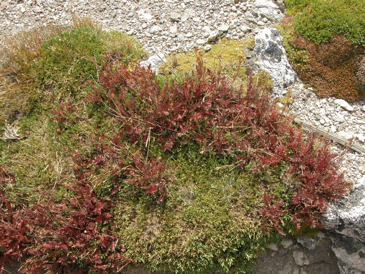 Red plants growing in green grass next to a rocky path beside the edge of a stream.