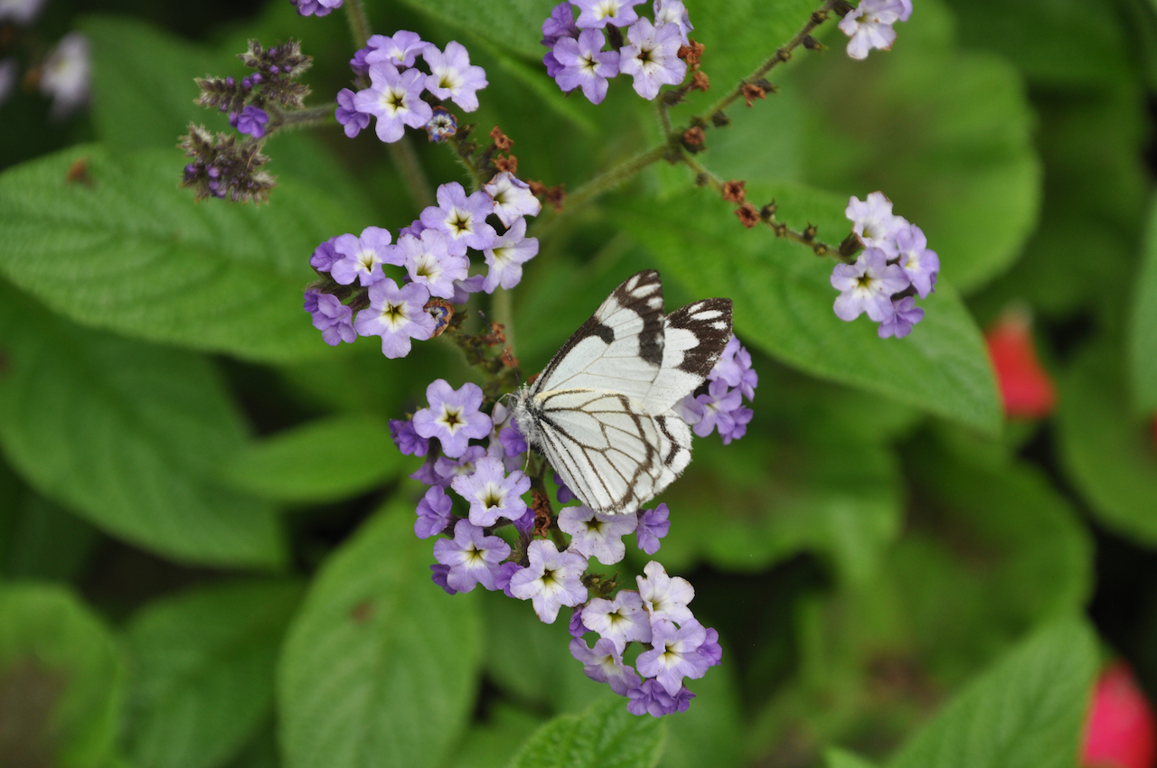 Butterfly on flowers in front of green leaves