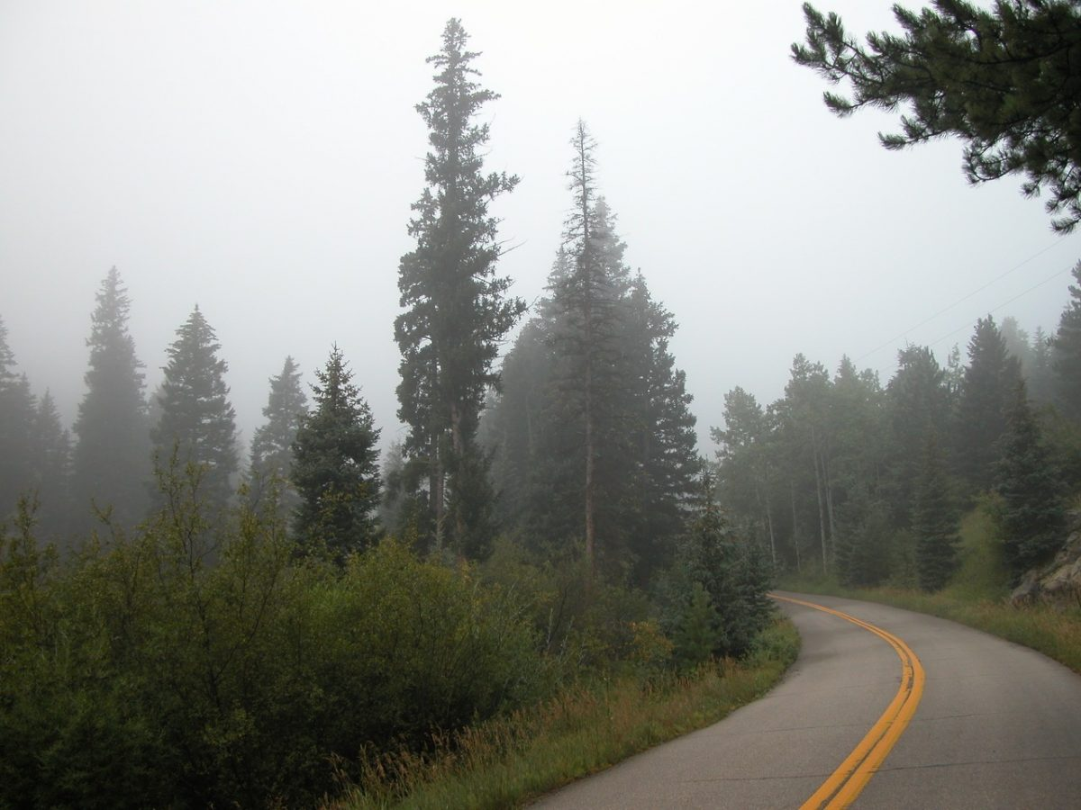 A country highway on a foggy day with evergreen forest on both sides of the roads.